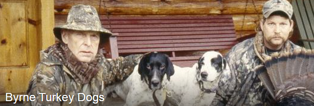 Fall Turkey Hunting with Dogs