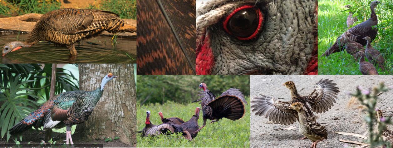 helpful turkey hunting websites