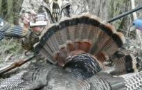 urban turkey hunting